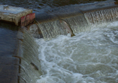 Trout Jumping over Sea Lamprey Barrier