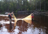 Fyke Netting on the Wolf River, Ontario